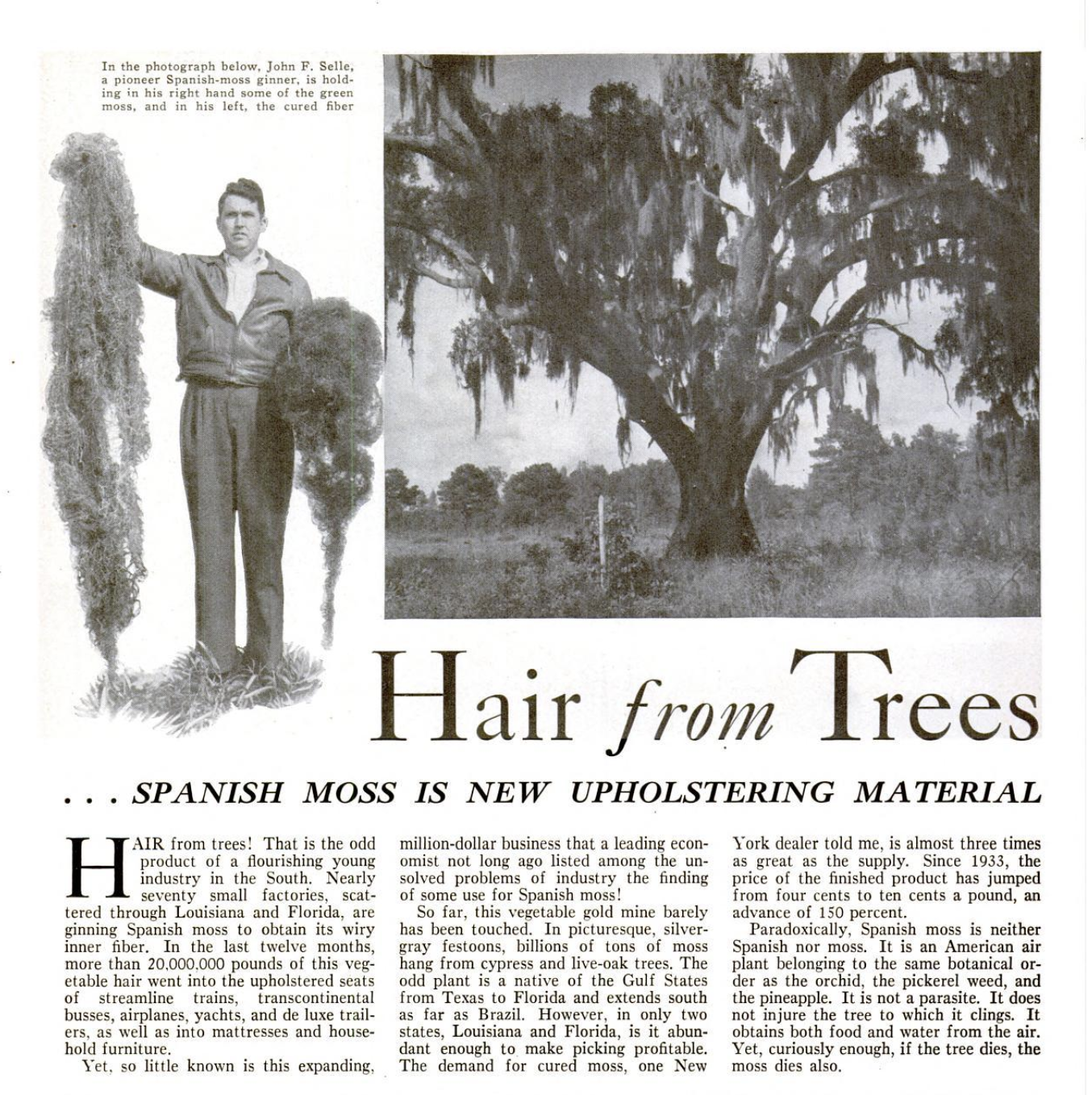 Hair from trees